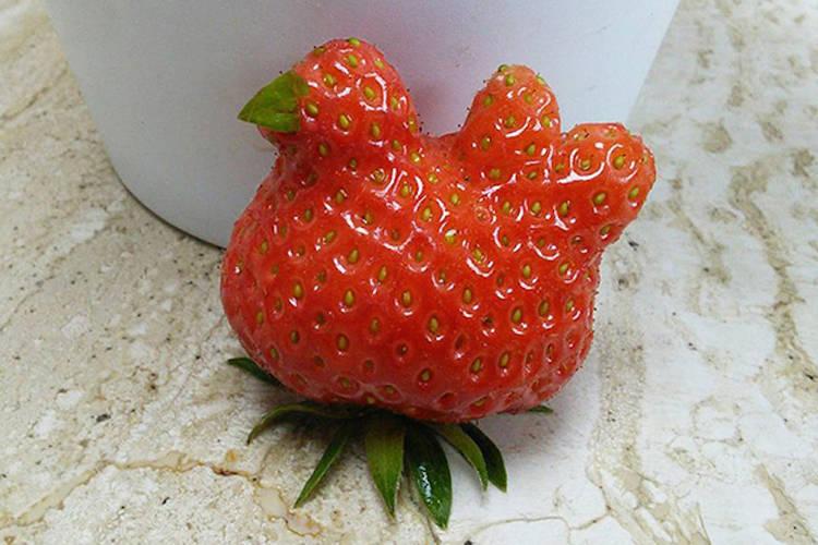 Frutas Y Vegetales Con Las Formas Más Extrañas Salpr